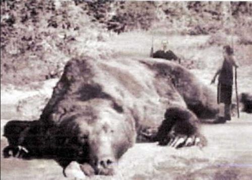 三毛別羆事件の写真は本物?体長2.7mを図で比較!復元地の情報について